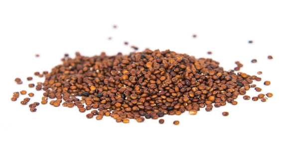 Quinoa red grains